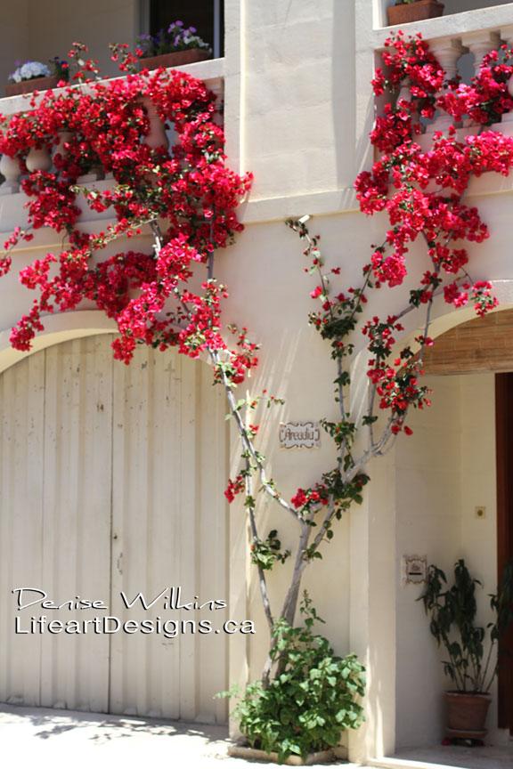 fbflowers-img_2915