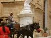 aimg_2779-mdina-horse