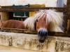 aimg_7257-horse-san-anton