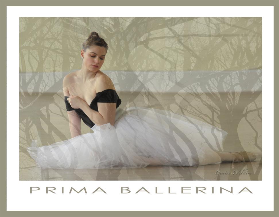 prima-ballerina-13-5x10-5