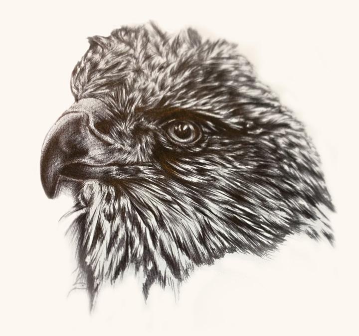 alanna-falcon-sketch