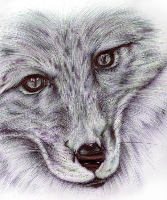 alanna-fox