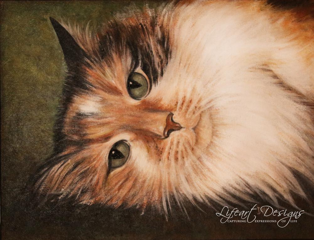 cat IMG_3584