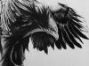 alanna-eagle