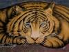 tiger 36x24 IMG_2986
