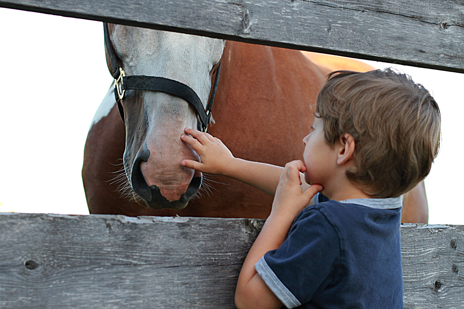 horse and child 3945