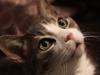 b-cat6239