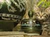 cat-8635