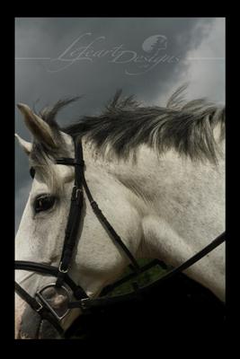 horse-4692